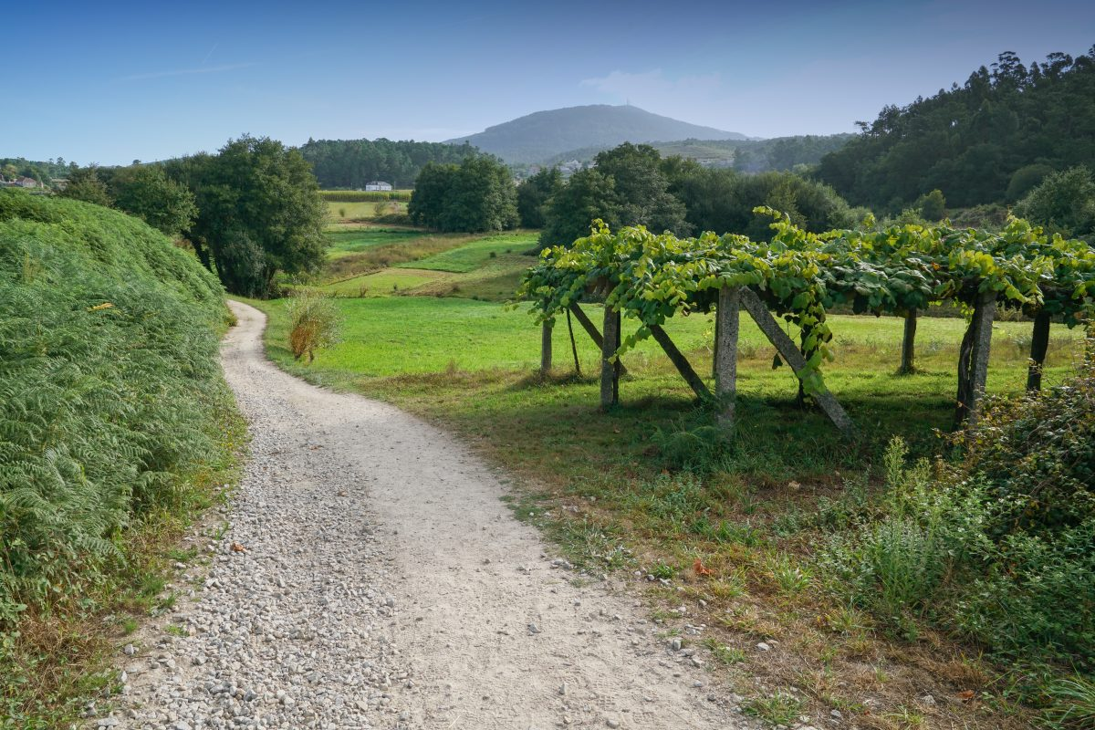 Vandring Fra Portugal Den Portugisiske Camino: 'Fra Tui Til Santiago Og Finisterra' 10. – 17. Oktober 2020