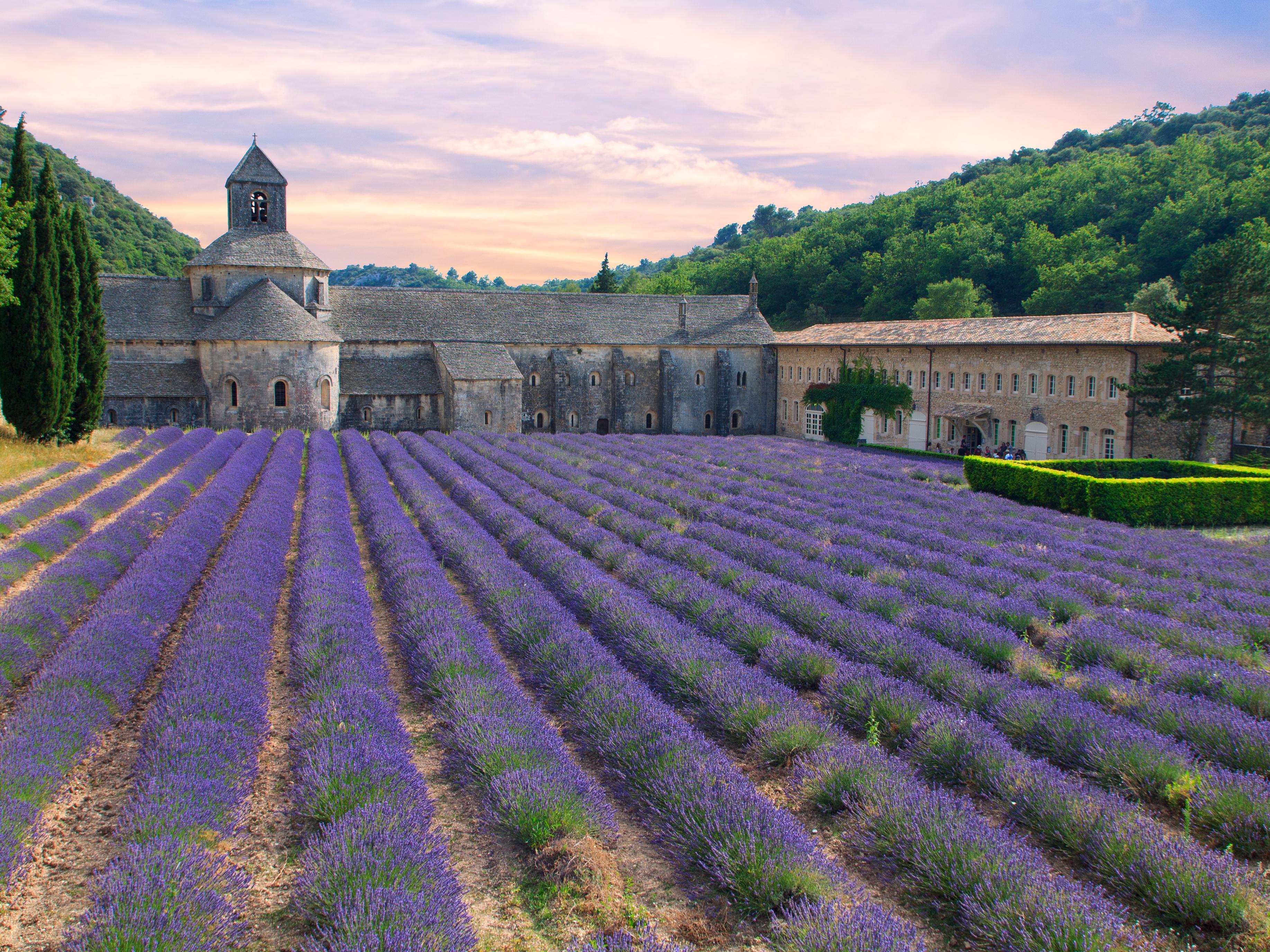 Rejse I Frankrig: Klosteret Og Lavendelmarken